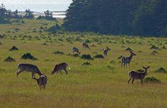 Ontario, Road Trip, Quebec, Island, Travel, Animals, Beautiful, Acadie, Laurent
