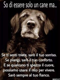 So di essere solo Animals And Pets, Funny Animals, Cute Animals, I Love Dogs, Cute Dogs, Cocker Spaniel Puppies, Irish Setter, Animal Quotes, S Pic