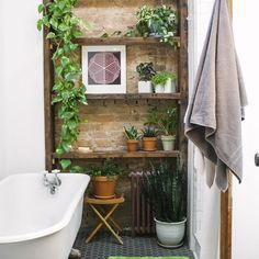 small bathrooms with indoor plants and starfish decor and paper and mat in 15 Favorites Bathroom Plants Choices