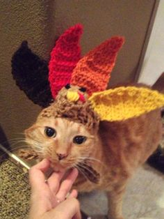 14 Cats Dressed As Thanksgiving - Cosmopolitan.com