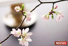 ネスカフェ NESCAFE (ネスレ日本)/桜 sakura