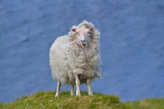 Conquering a Blustery Peak by Emily Biggs, shortlisted for the 12-15s category. RSPCA young photographer awards
