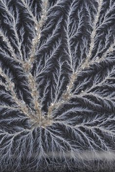 Lichtenberg Figure- Stay tuned for our Lichtenberg Education Station Activity!