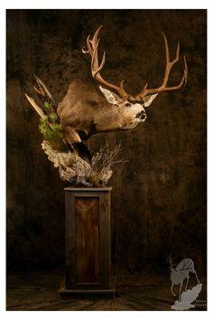 Deer Hunting Decor, Mule Deer Hunting, Whitetail Deer Hunting, Hunting Stuff, Taxidermy Decor, Taxidermy Display, Bird Taxidermy, Deer Mount Decor, Deer Decor