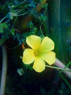 Flowers   WalterCiacci2014©