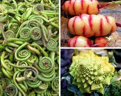 Who can identify these vegetables? 14 exotic vegetables you've probably never heard of http://www.mnn.com/food/healthy-eating/photos/14-vegetables-youve-probably-never-heard-of/what-in-the-world