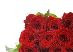 Bouquet, rouge, Roz