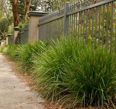 Find Lime Tuff - Lomandra longifolia confertifolia at Bunnings Warehouse. Visit your local store for the widest range of garden products. Front Gardens, Small Gardens, Small Garden Landscape, Landscape Design, Sun Plants, Garden Plants, Lomandra, Low Maintenance Plants, Yard Design