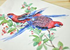 Crimson Rosella | Watercolor | Natalia Tyulkina