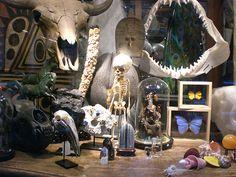 Evolution wares, NYC