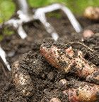 Potatoes - Potatoes are a great option; you can use growing them as a way of teaching your children where their food comes from, the process from field to plate.  Read more: http://www.thegardencentregroup.co.uk/gardening-advice/seeds-to-grow-with-children