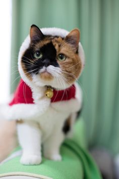 I am dainty. I am delicate. Now feed me diamonds. | 12 Animals Rocking Ugly Holiday Outfits Who Will Bring Joy To Your Heart