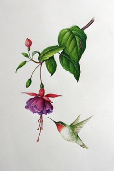 - Painting Art by Margit Sampogna - Nature Art & Wildlife Art - contemporary realism - Sampogna Art Illustration Botanique, Botanical Illustration, Botanical Prints, Plant Drawing, Painting & Drawing, Watercolor Flowers, Watercolor Paintings, Hummingbird Drawing, Hummingbird Tattoo