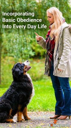 Dog training is both rewarding and engaging experience for you and your pooch. It doesn't have to cost money, nor does it have to take place in a classroom. Jodi Stone of /heartlikeadog/ shares some basic obedience commands you can practice with your dog #dogtraininghacks #dogobediencetraining