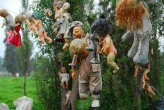 LA ISLA DE LAS MUÑECAS-ubicada en un canal del estado mexicano de Xochimilco.Julián Santana Barrera, el dueño de la isla, descubrió el cadáver de una niña pequeña en un canal cercano y se convenció de que la muerte fue por espíritus malignos.Para evitar que los espíritus vuelvan y provoquen más estragos, comenzó a coleccionar muñecas y partes y a colgarlas de los árboles creando un paisaje perturbador.