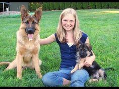 Funny German Shepherd Compilation Videos Part 10 #germanshepherd
