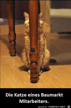 funpot: Katze.png von Petzi