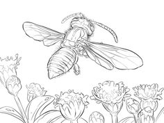 Yellow Jacket Wasp Coloring page
