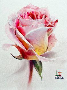 Saatchi Art Artist La Fe Painting Watercolor without Drawing Rose 10062016 Watercolor Rose, Watercolor Illustration, Watercolour Painting, Watercolors, Plant Drawing, Drawing Art, Rose Art, Flower Art, Saatchi Art