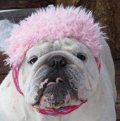 ENGLISH BULLDOG Pink Flowers GIRLY Faux fur on brim, reversible