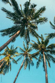 57 Super ideas for screen savers iphone beach palm trees Tree Wallpaper Iphone, Tumblr Wallpaper, Coconut Palm Tree, Palm Trees Beach, Blue Sky Background, Palmiers, Beach Aesthetic, Winter Trees, Wall Collage