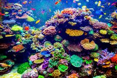 How to start a saltwater aquarium. A comprehensive guide with tips to start a saltwater aquarium that covers all you need to know to start the very first saltwater fish tank and clear common misconceptions between saltwater and freshwater aquarium. Saltwater Aquarium Beginner, Saltwater Tank, Marine Environment, Ocean Creatures, Jolie Photo, Red Sea, Great Barrier Reef, Ocean Life, Tropical Fish