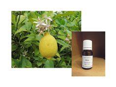 arthrite huiles essentielles