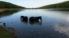 #horses at #Nebrodi natural Park