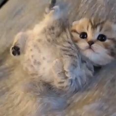 Cute Baby Cats, Cute Cats And Kittens, Cute Funny Animals, Cute Baby Animals, Kittens Cutest, Animals And Pets, Funny Cats, Baby Kitty, Pet Cats