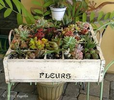 Repurposed box with succulents.