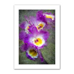 'Irises' by David Liam Kyle Photographic Print on Canvas