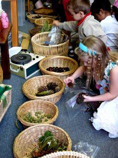 collecting and sorting natural materials,