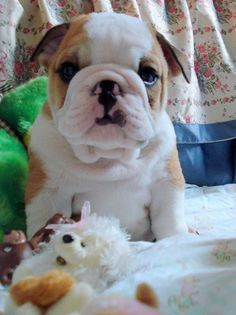 why are you so sad, this toy for you........smile :). . .  posted by: pinterest
