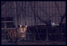 cat look ... - wish a good time . Ozan Kuas photography ... follow me ...