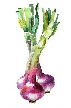 Organic onions by aquarelle_art