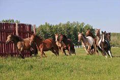 Freee... horses!