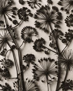 Queen Annes Lace art / sewing fiber art / color inspiration / black and white / monochromatic / texture / pattern / nature / art /
