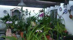 Cómo rejuvenecer una Orquídea Cymbidium