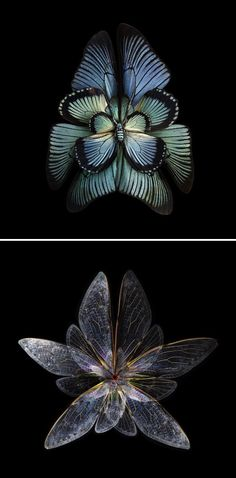 Photos of insect wings manipulated to look like blooming flowers by Paris-based fine art photographer Seb Janiak. #photography