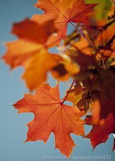 autumn leaves )