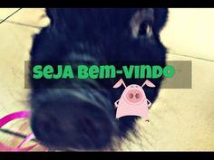 Zoo Pet Shop - O diário: Seja bem-vindo - a nova rubrica