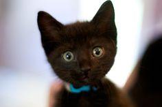 Adorable black kitten