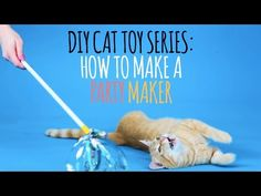 Cats Toys Ideas - 10 Simple Homemade Cat Toys That Make Great Holiday Gifts - CatTime - Ideal toys for small cats