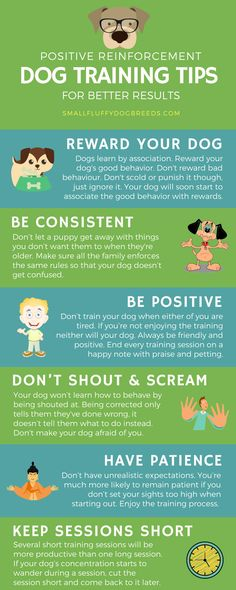 Some dog training tips to get better results.