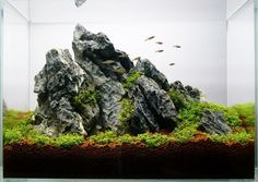 "Favourites: 13L iwagumi by Petr Valošek‎ Very nice and tall composition using Seiryu stone and Hemianthus callitrichoides ""cuba"""