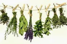 August 29 – More Herbs, Less Salt Day