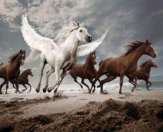 mientras otros solo corren, tu puedes volar