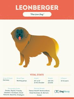 The jumb-sized Leonberger is a dog breed that's been around for over 150 years. We take a closer look at their history and their big role in…