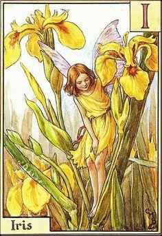 Iris uit: alphabet fairies