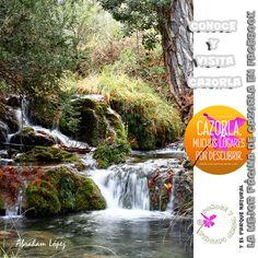 A lo largo de todo el recorrido de la ruta por el arroyo de Guazalamanco, podremos ver abundantes pozas y pequeñas cascadas de aguas limpias y cristalinas. Hay que ir provistos de cámara fotográfica...